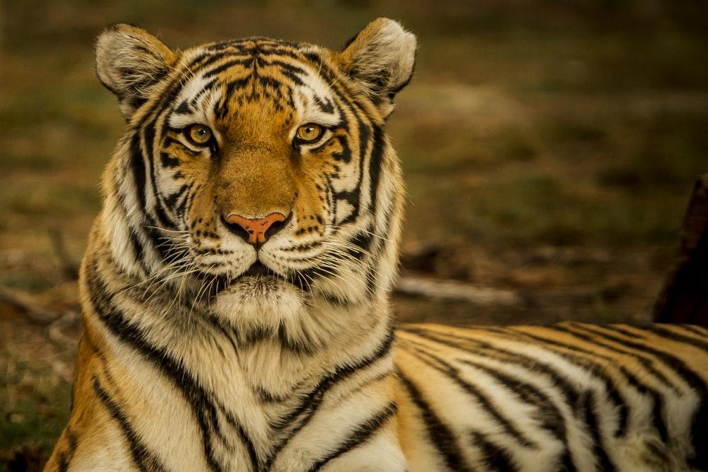 Tiger Rhino Safari Tour Package in India