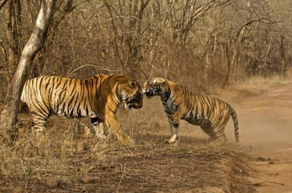 Ranthambore travel information