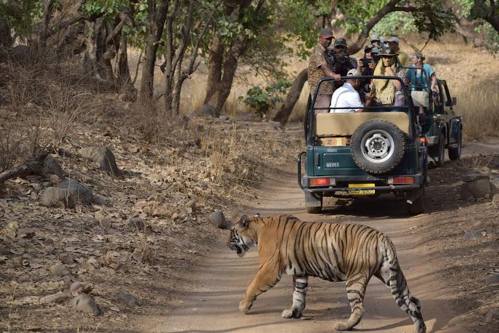 Visit Ranthambore National Park