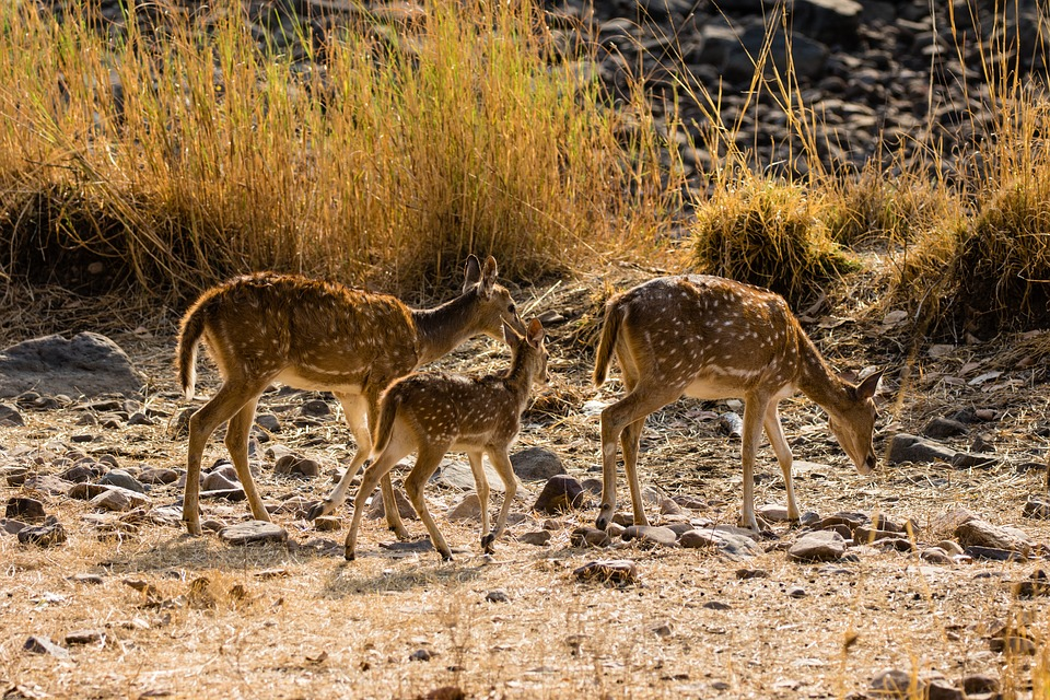 Tour packages to Ranthambore